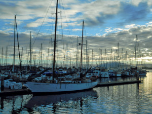 Home is Where Many Masts Stay